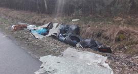 Mieszkaniec Wsoli zrobił z lasu zrobił śmietnisko [FOTO]