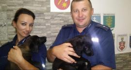 Policjanci uratowali porzucone szczeniaki