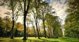 Piknik rodzinny i otwarcie parku na Michałowie