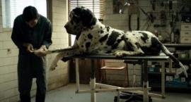 """""""Dogman"""" w Kinie Konesera"""