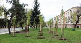 ZUK posadzi nowe drzewa