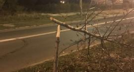 Łamał drzewka na ulicy Wernera