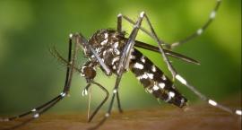 Pilne! Szykują się kolejne opryski przeciwko komarom i kleszczom