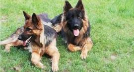 Zaginęły dwa psy. Może ktoś je widział?