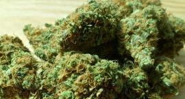 Zatrzymano 3 mężczyzn za posiadanie narkotyków