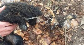 Skatował trzy psy. Jednego zabił i zakopał. Fundacja prosi o pomoc w odnalezieniu sprawcy