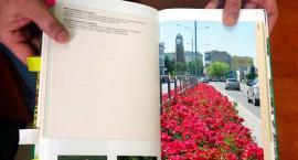W Radomiu posadzono kolejne róże, które zrobiły furorę w całej Europie