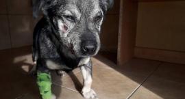 Dzielnicowa pomogła psu przymarzniętemu do chodnika