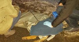 Mundurowi pomogli rannemu psu