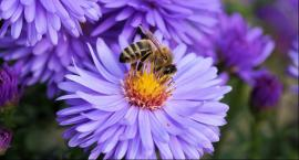 Dodaj do ULUbionych - warsztaty pszczelarskie w Amfiteatrze