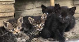 Kotki potrzebują adopcji! [FOTO]