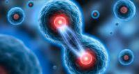 Komórki macierzyste a usuwanie zmarszczek