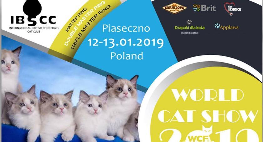 Wystawy, Wystawa Kotów Rasowych Piasecznie - zdjęcie, fotografia