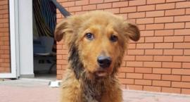 Uratowano psa, którego ze skrępowanymi łapami i w worku wrzucono do wody
