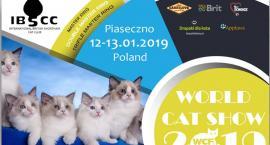 Wystawa Kotów Rasowych w Piasecznie