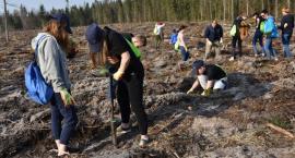 Dzięki Grupie PGE powstają kolejne lasy pełne energii