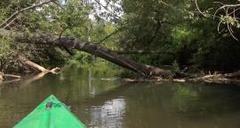 Kajakiem po piaseczyńskiej Amazonce