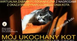 Mój ukochany kot. Zabawa fotograficzna na FB (17/02/2017 - 19/02/2017)
