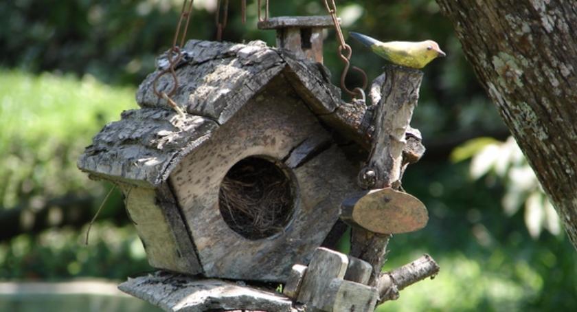 Urząd dzielnicy, Partycypacyjne budki ptaków - zdjęcie, fotografia