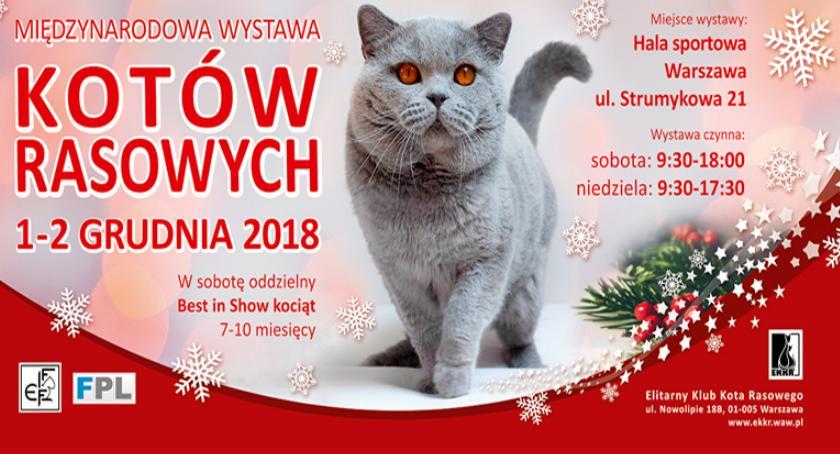 wystawy, Międzynarodowa Wystawa Kotów Rasowych Warszawie - zdjęcie, fotografia