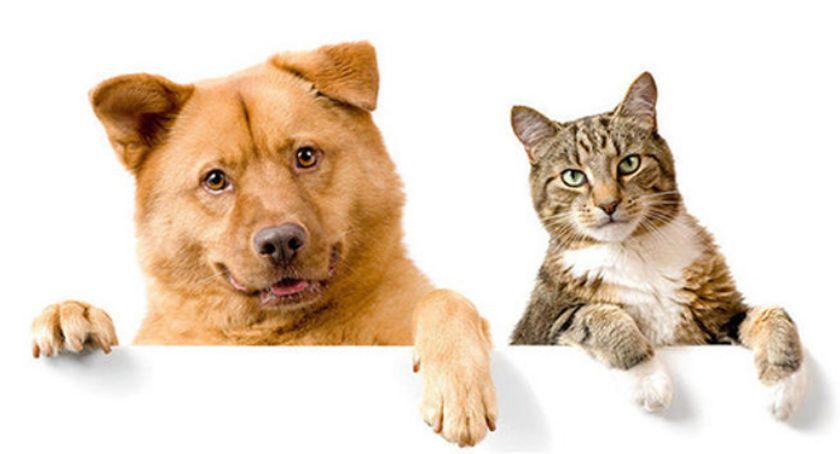 zwierzęta, Pruszkowskie Stowarzyszenie Rzecz Zwierząt zaprasza adopcji - zdjęcie, fotografia