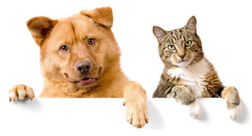 zwierzęta, Schronisko Bezdomnych Zwierząt Milanówku zaprasza adopcji - zdjęcie, fotografia
