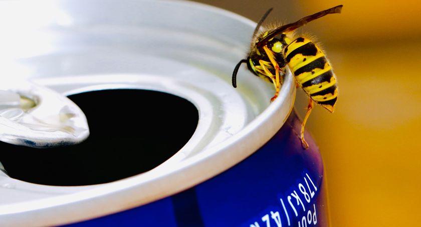 zwierzęta, poradzić sobie gniazdami dzikich owadów okolicy - zdjęcie, fotografia