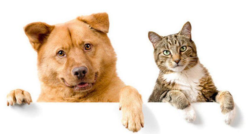 zwierzęta, Zaadoptuj - zdjęcie, fotografia