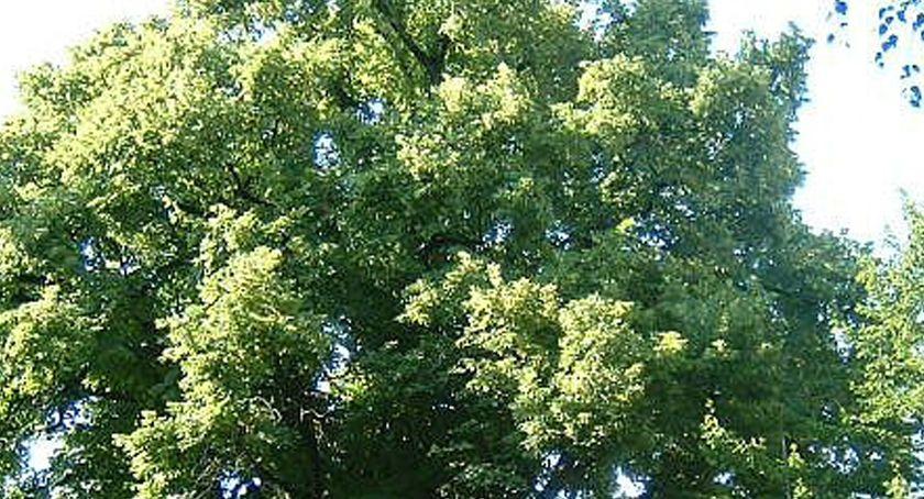 inwestycje, Starych Komorowie zabiegi pielęgnacyjne drzew - zdjęcie, fotografia