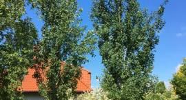 """""""90 drzew na 90-lecie Letniska Brwinów"""""""