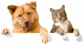 Psy do adopcji w Pruszkowskim Stowarzyszeniu na rzecz Zwierząt