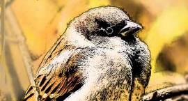 W niedzielę 18 grudnia zapraszamy na przepiękny film i arcyciekawe spotkanie ornitologiczne!