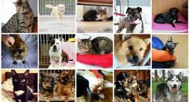 Bazarek dla psiaka i kociaka z Pruszkowskiego Stowarzyszenia na Rzecz Zwierząt