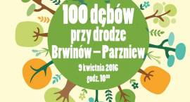 100 dębów przy drodze Brwinów-Parzniew