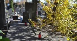 Kwesta na cmentarzu w Brwinowie