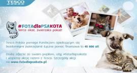 Ruszyła akcja #FOTAdlaPSAKOTA. Razem z Tesco pomagamy zwierzętom przetrwać zimę!