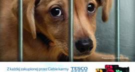 Pomóż zwierzętom z województwa mazowieckiego przetrwać zimę z Animals i Tesco!