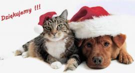 Pruszkowskie Stowarzyszenie na Rzecz Zwierząt - kolejny kociak do adopcji