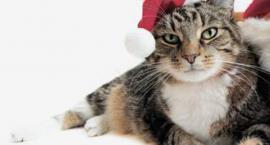 Pruszkowskie Stowarzyszenie na Rzecz Zwierząt - koty do adopcji