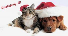 PSnRZ - psy i koty do adopcji