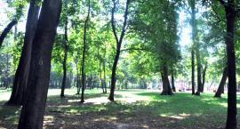 Wykonanie dokumentacji projektowej ogrodu botanicznego w brwinowskim parku
