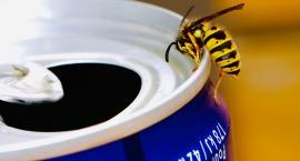 Jak poradzić sobie z gniazdami dzikich owadów w domu lub okolicy