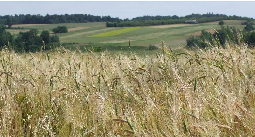 Kultura, Misja Natura Białystok - zdjęcie, fotografia