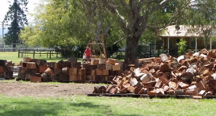 Blogi, Lecą Wióry premia Zakładu Usług Leśnych należy - zdjęcie, fotografia