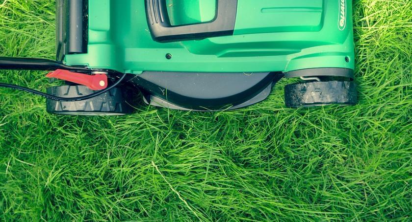 Styl życia, wiesz pielęgnować latem trawnik dobrych porad - zdjęcie, fotografia