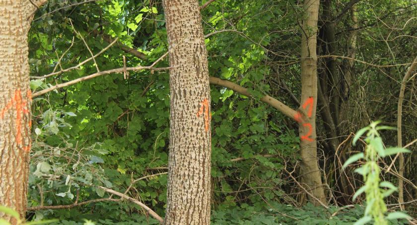 Wiadomości, Dyrektor Lasów Państwowych Giżycka został pobity przez aktywistę - zdjęcie, fotografia