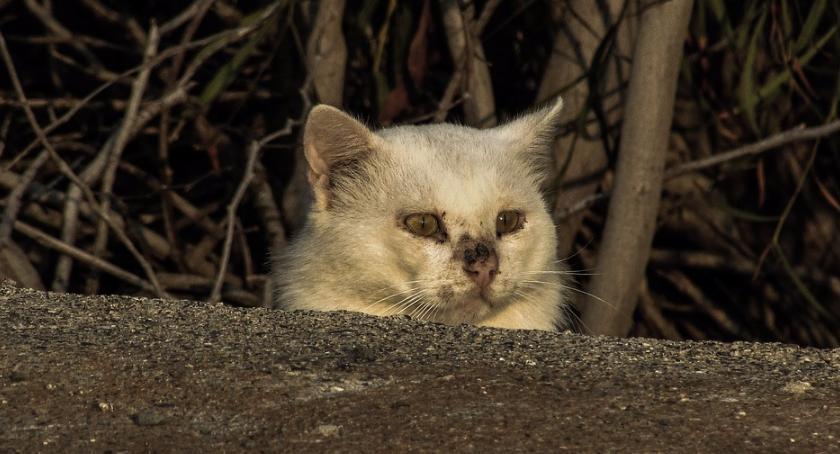 Styl życia, Zwierzętom warto trzeba pomagać umiejętnie - zdjęcie, fotografia