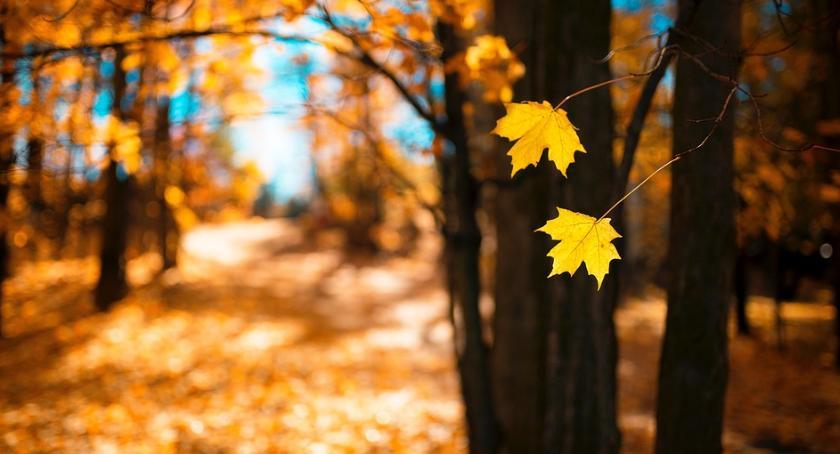 Styl życia, Warto dbać zieleń mieście końcu służy wszystkim - zdjęcie, fotografia
