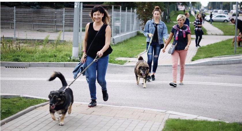 Wiadomości, Schronisko Radysach wcale zajmować psami Hajnówki - zdjęcie, fotografia