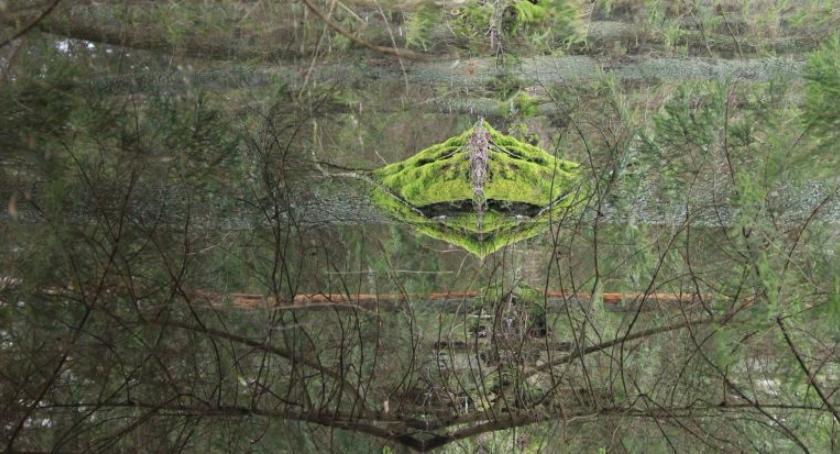 Styl życia, Spacer lesie może inspirować - zdjęcie, fotografia